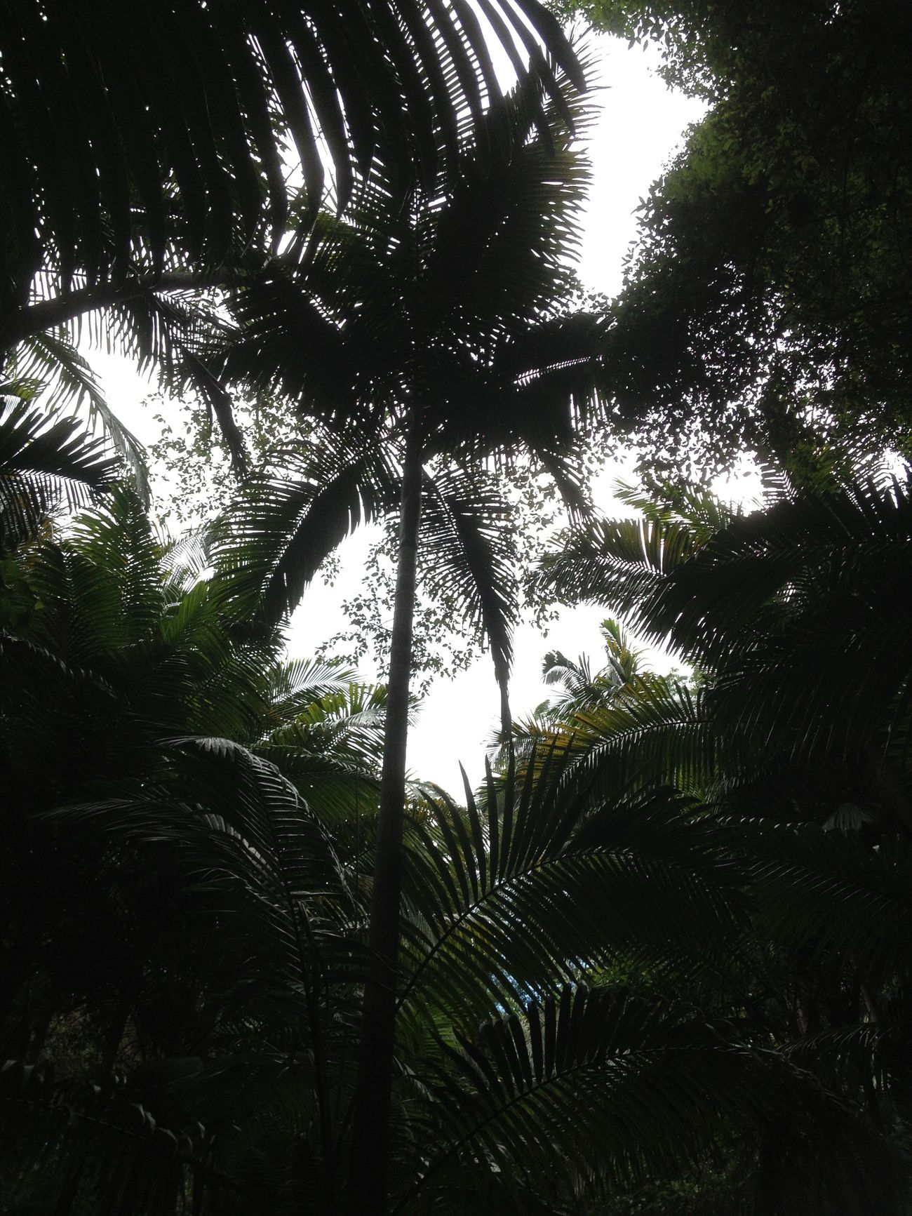 How Do We Build The World? Rainforests Plant Trees Lungs Of The Earth Ecology Is Survival