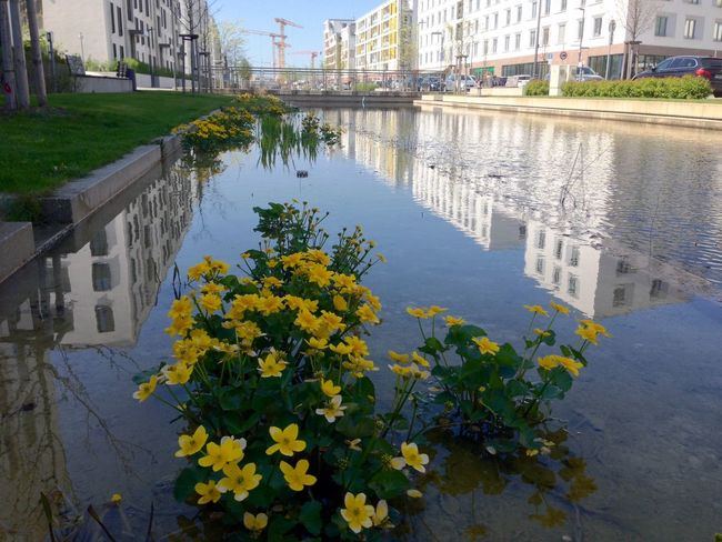 Architecture Bahnstadt Heidelberg Building Building Exterior Built Structure Canal City City Life Day Diminishing Perspective Flower Growth Modern City Nature No People Outdoors Plant Sky The Way Forward Water