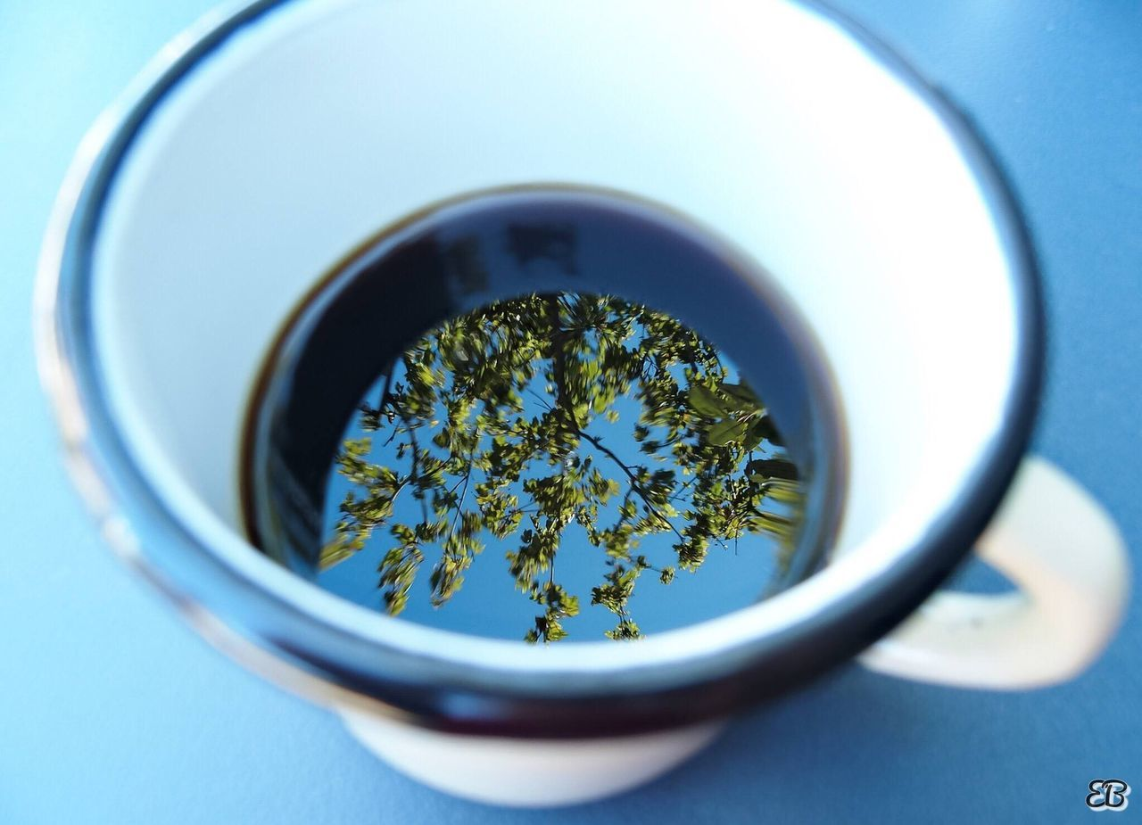 green tea, green color, no people, indoors, table, tea - hot drink, close-up, leaf, drink, herbal medicine, herbal tea, freshness, day