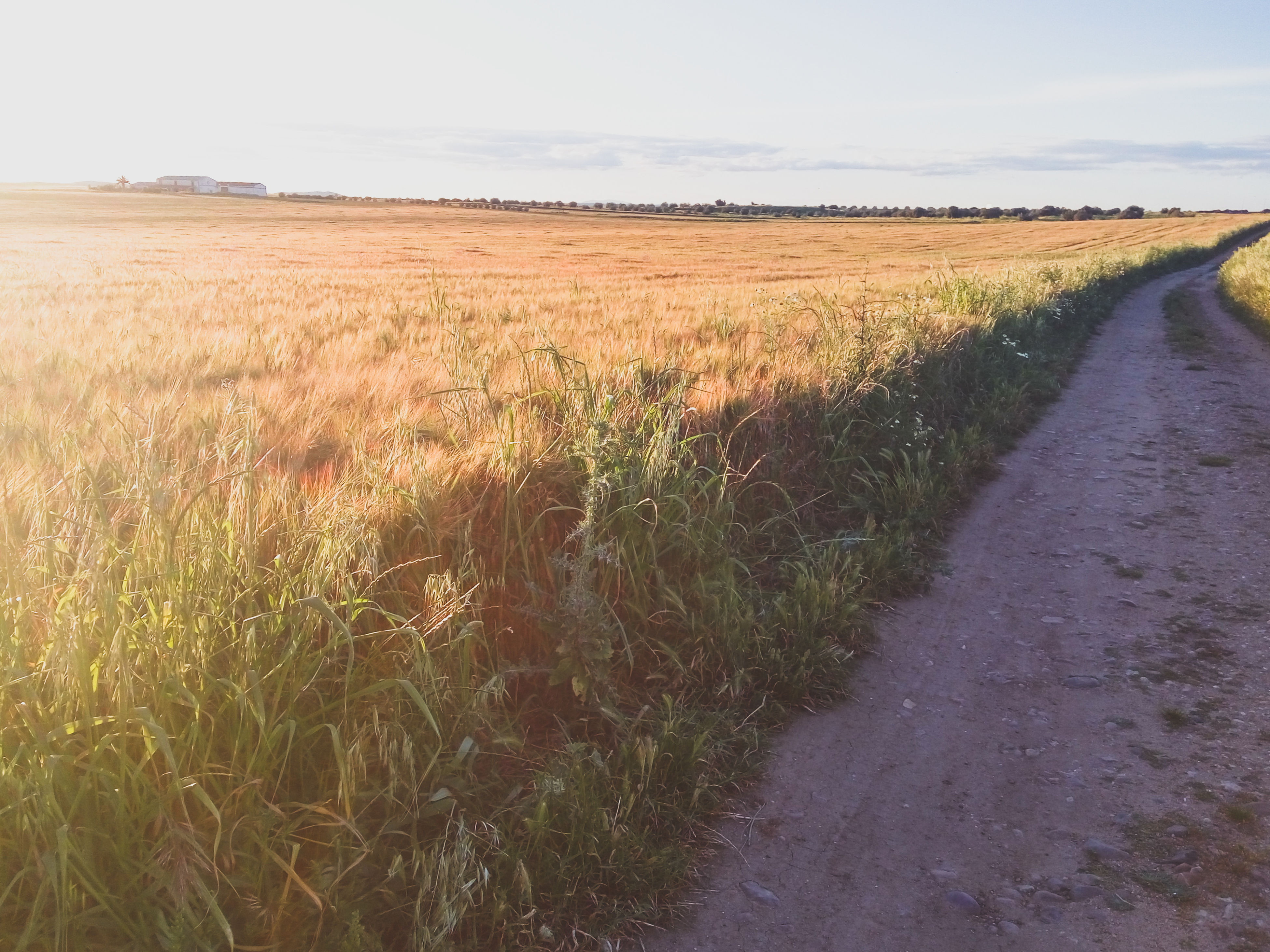 grass, the way forward, field, landscape, tranquility, tranquil scene, growth, road, nature, walkway, diminishing perspective, beauty in nature, plant, scenics, pathway, narrow, day, rural scene, agriculture, sky, long, grassy, vanishing point, footpath, outdoors, remote, green color, no people, farm, growing