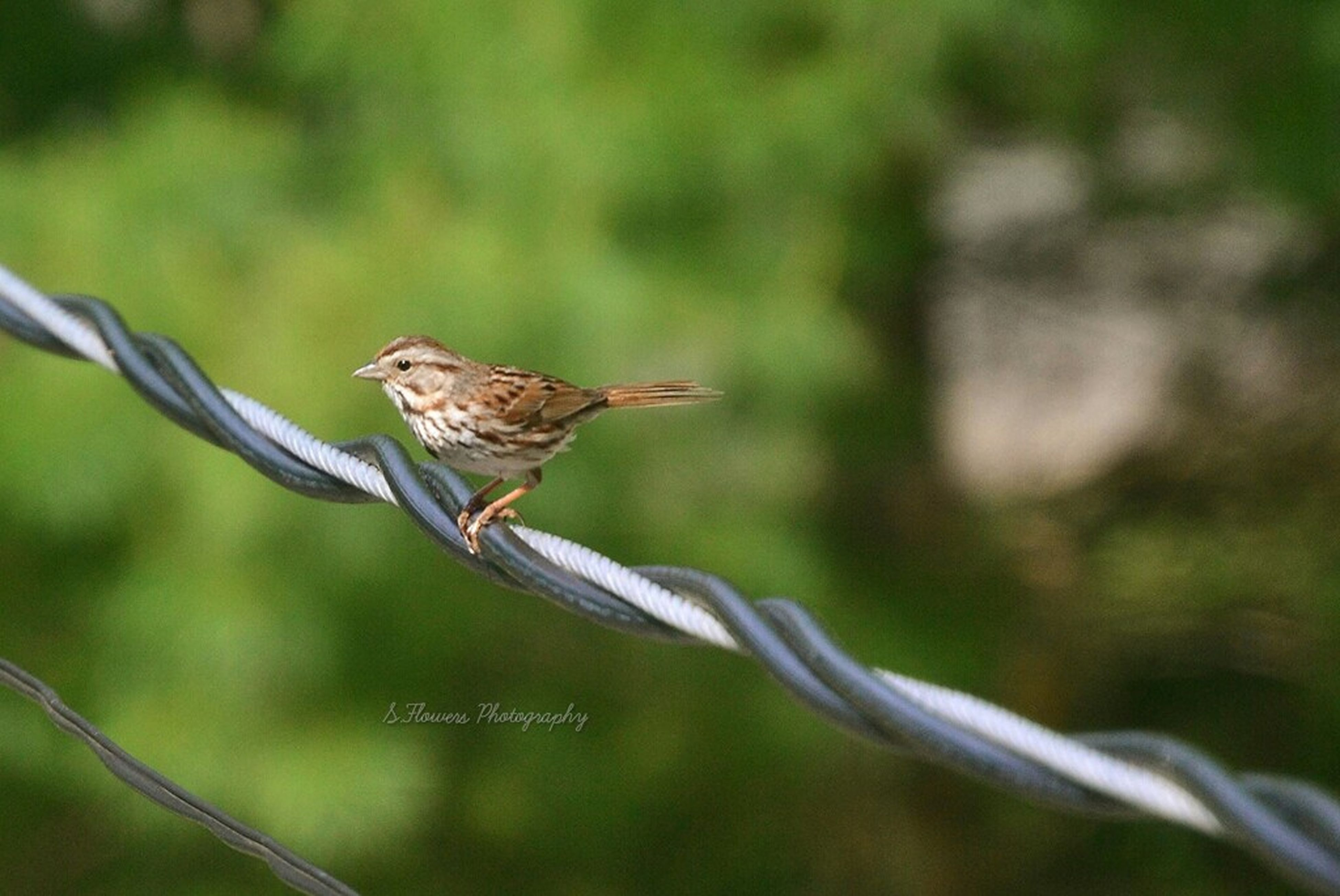 animal themes, animals in the wild, one animal, wildlife, bird, focus on foreground, perching, branch, full length, nature, selective focus, side view, close-up, tree, day, outdoors, no people, spread wings, twig, flying