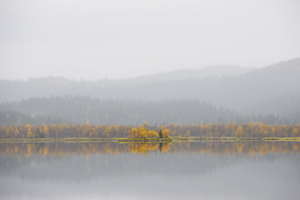 Reflection Autumn Fog Lake Tree Forest Water Nature Beauty In Nature Mountain Scenics Outdoors Landscape Leaf No People Multi Colored Gold Colored Planet Earth Sweden Beauty In Nature Autumn Reflection Mountains