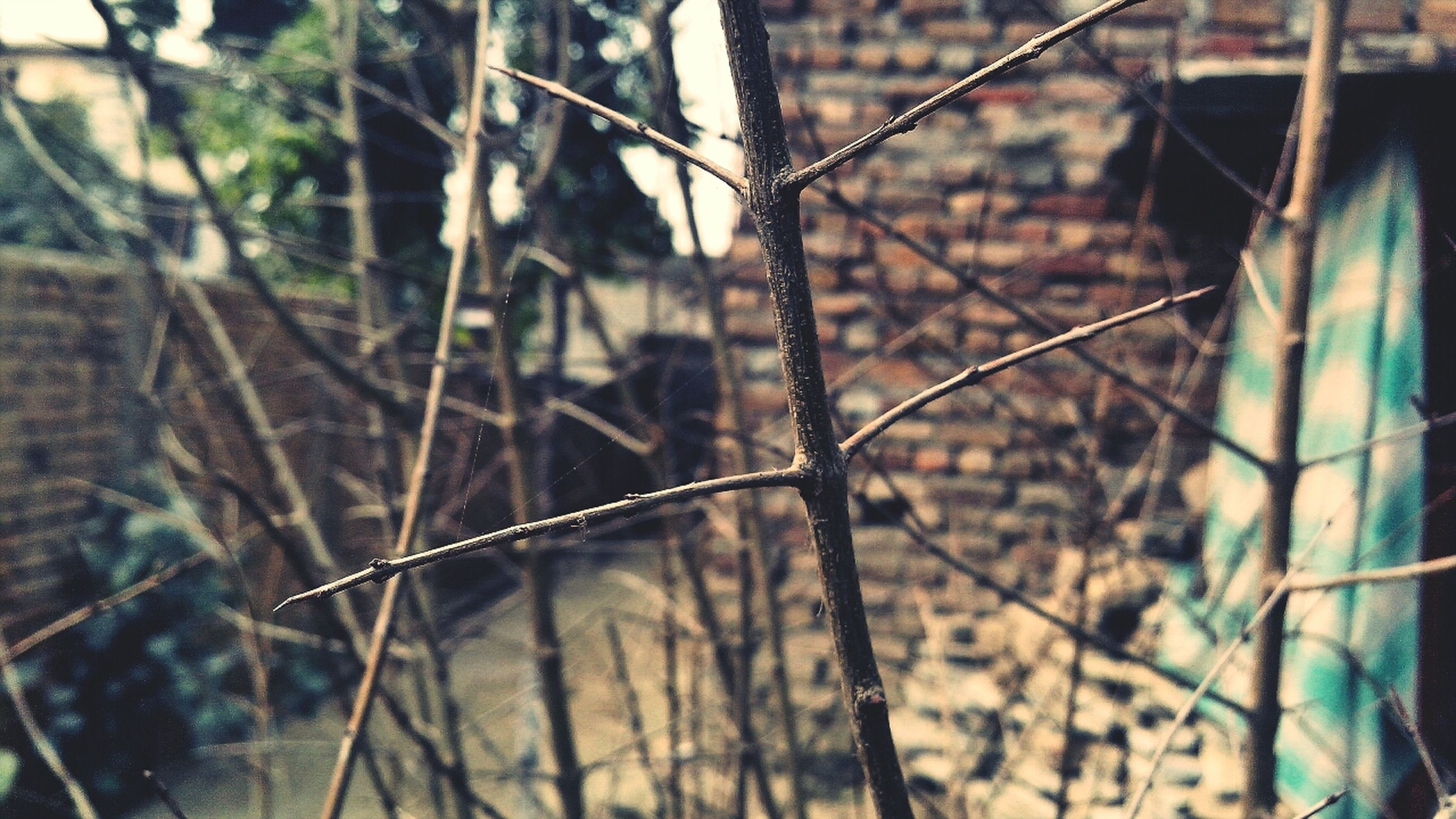 chainlink fence, focus on foreground, fence, protection, metal, close-up, safety, security, barbed wire, selective focus, day, pattern, outdoors, branch, no people, metallic, spider web, nature, tree, sunlight