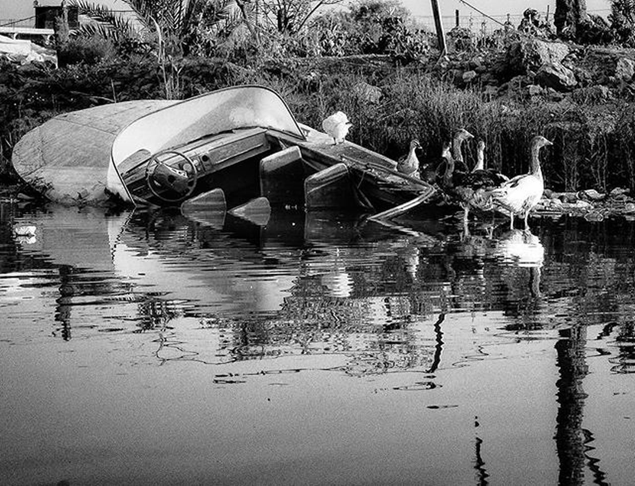 Sony Nex5 Sonynex5 Blackandwhite Monochrome River Shattalarab Palms Tree Duck Boat Sank Reflection Bnw