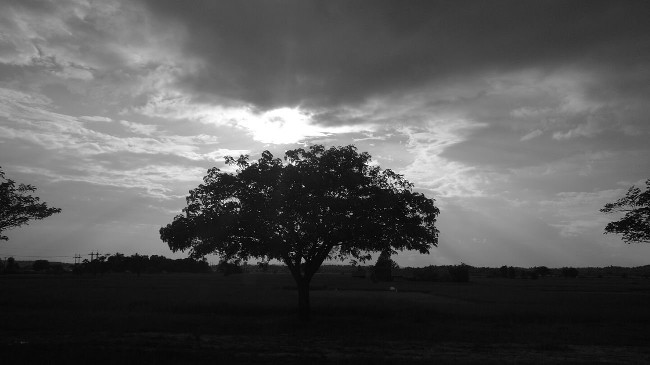 Tree Landscape Nature Horizontal Myanmarburma Myanmarstreetphotography Huwawie P9 Monochrome Photography Cloud - Sky Taywai