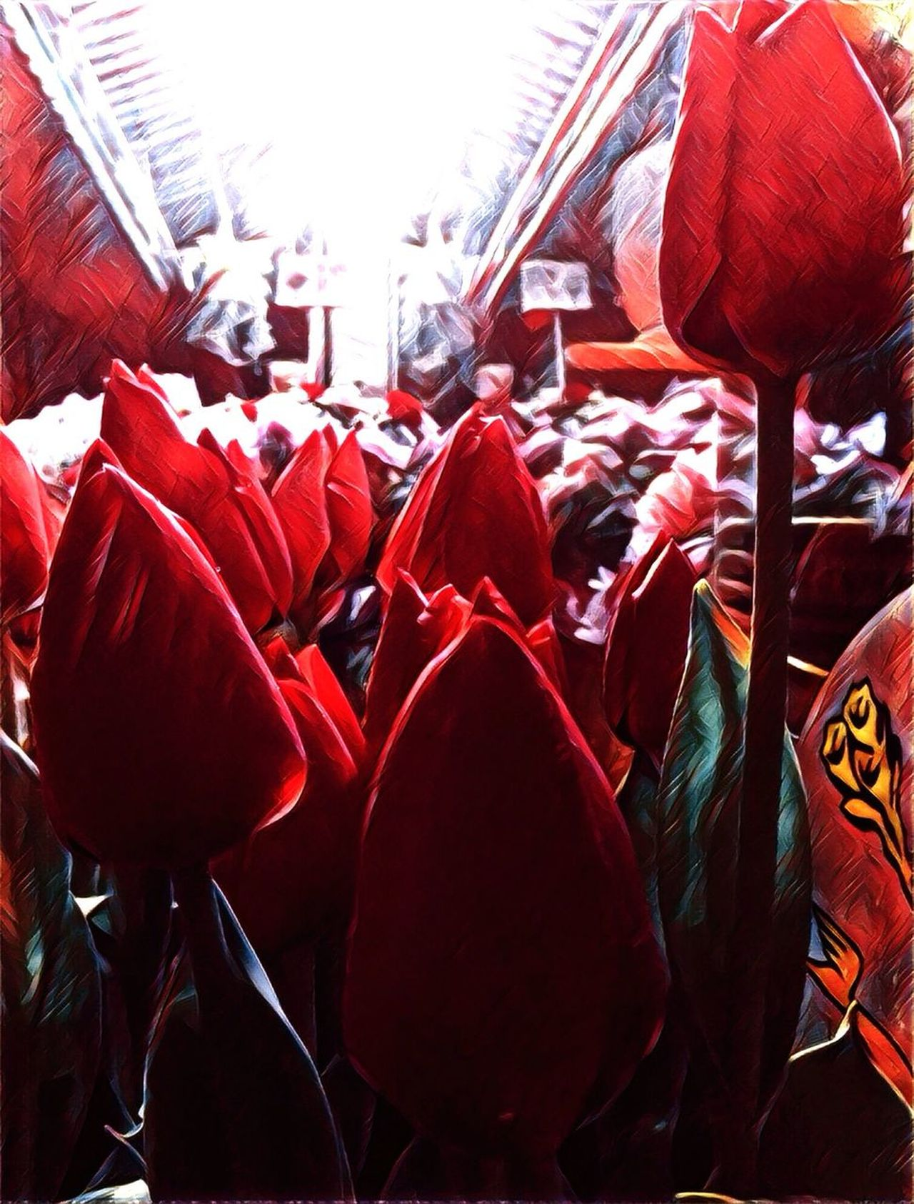 Lining up for the concert Crowd New York City Flowers Tulips Flower