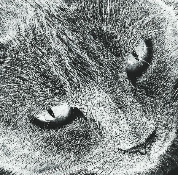 Close-up Day Cat Catoftheday Blackandwhite Black & White Amateurphotography Amateurphotographer  Animals Animal Chat Pet Pet Photography  Focus Noir Et Blanc Meow Cat Eyes Eyes Miaou Pet Portrait Animallovers Animal Portrait