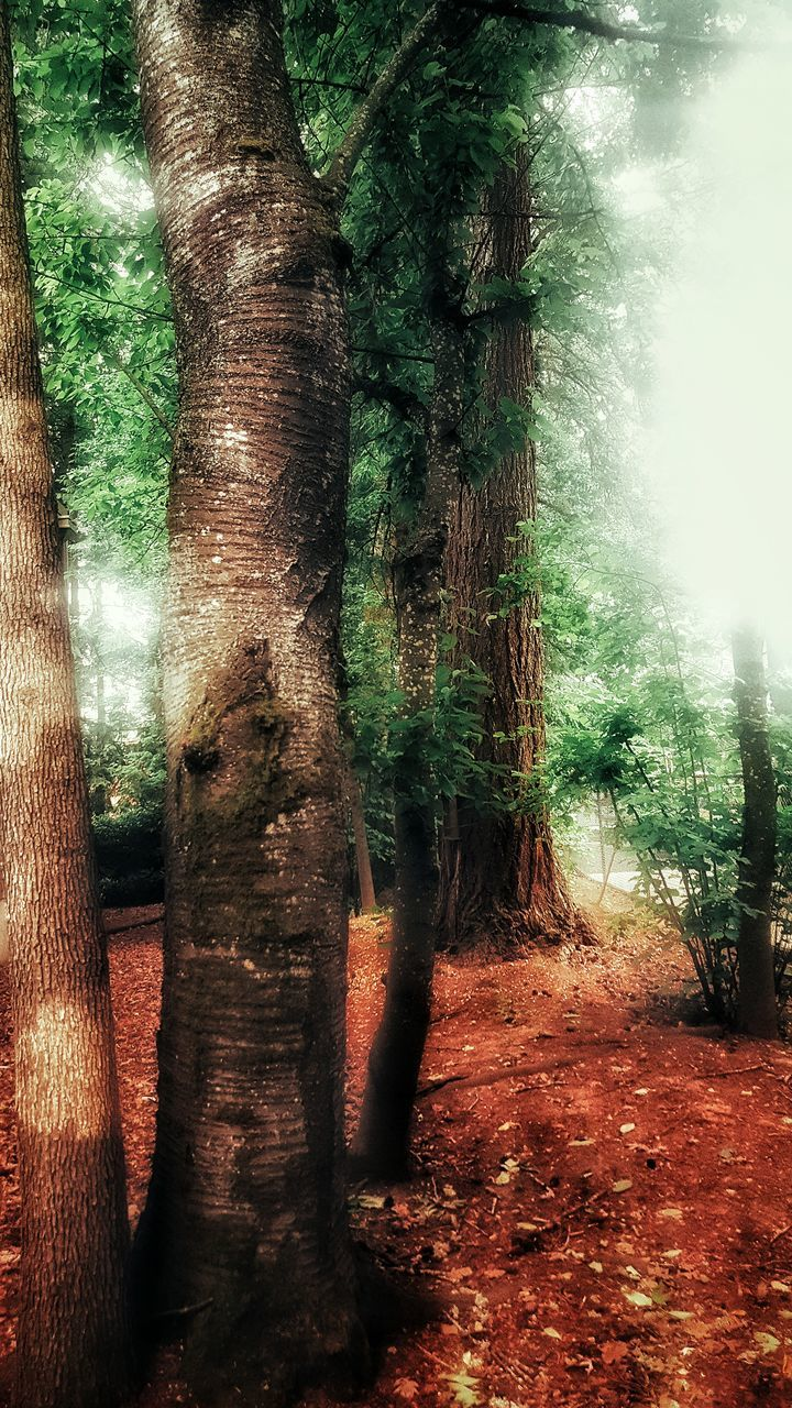 tree trunk, tree, nature, day, no people, forest, tranquility, beauty in nature, growth, outdoors, scenics, landscape