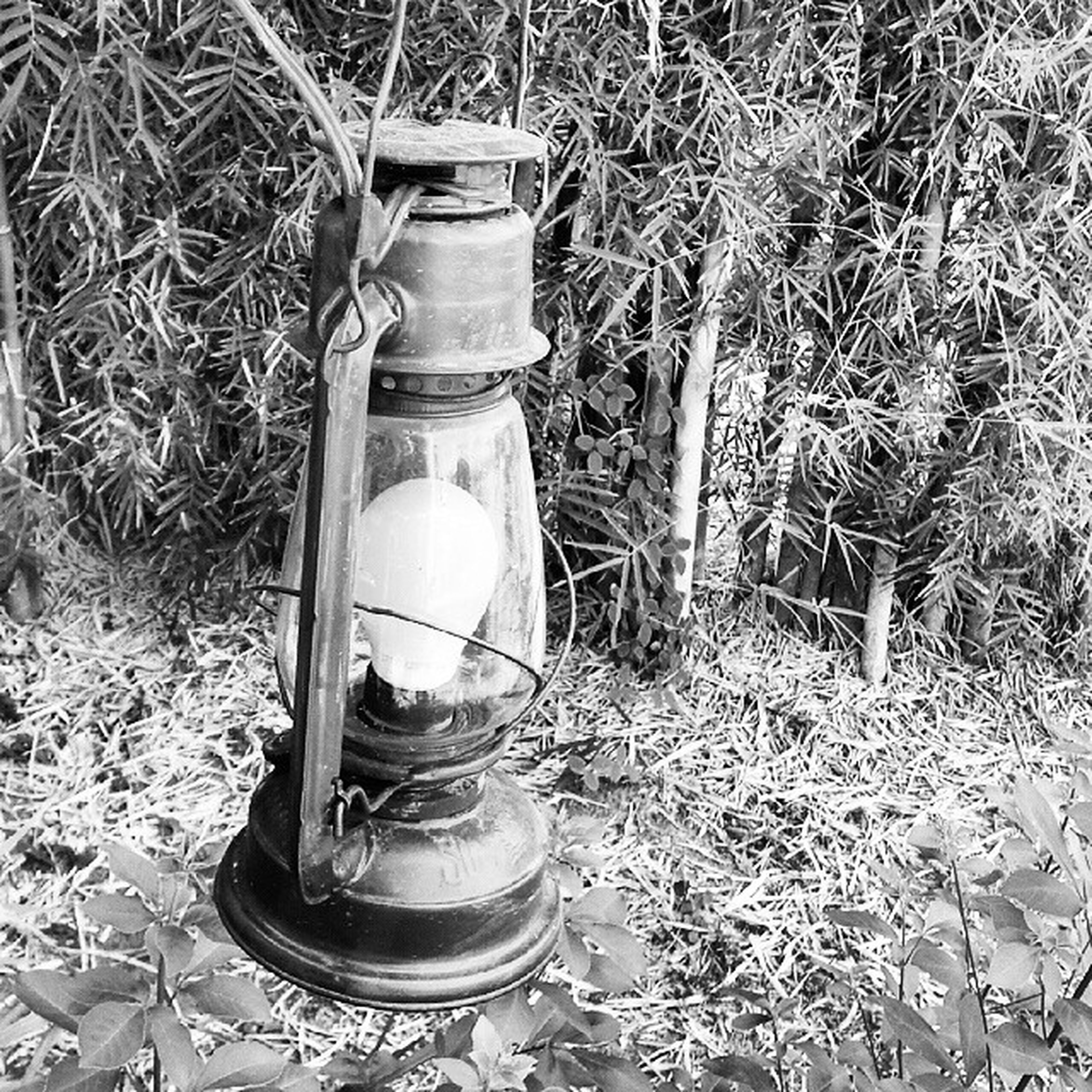 abandoned, container, metal, still life, obsolete, close-up, damaged, old, no people, field, day, plant, broken, equipment, outdoors, metallic, high angle view, man made object, front or back yard, messy