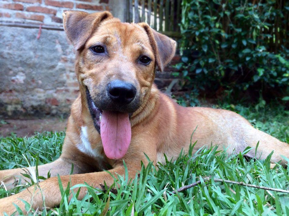 Bro the little dog. Animals Dog Pets Outdoors EyeEm