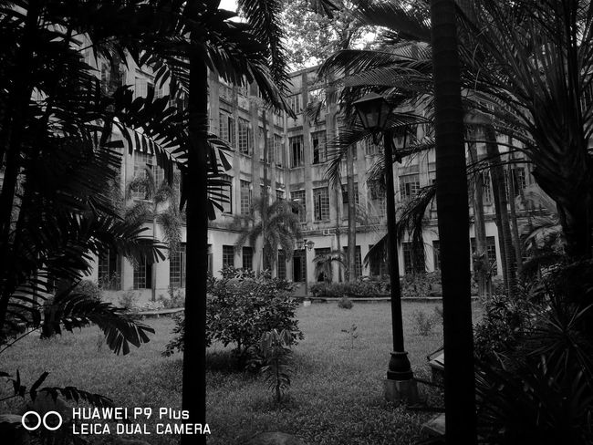 Monochrome Photograhy Architecture Building Exterior Built Structure Trees Tree Trunk Emotions Captured Nostalgia Timeless Timeless Moments Timeless Memories Finding The Beauty Monochrome Monochrome Nature Huawei P9 Plus Huawei P9 Leica
