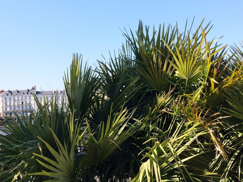 Palm Tree Grass Clear Sky Plant Nature Outdoors Beauty In Nature Spring Green Color City Nantes