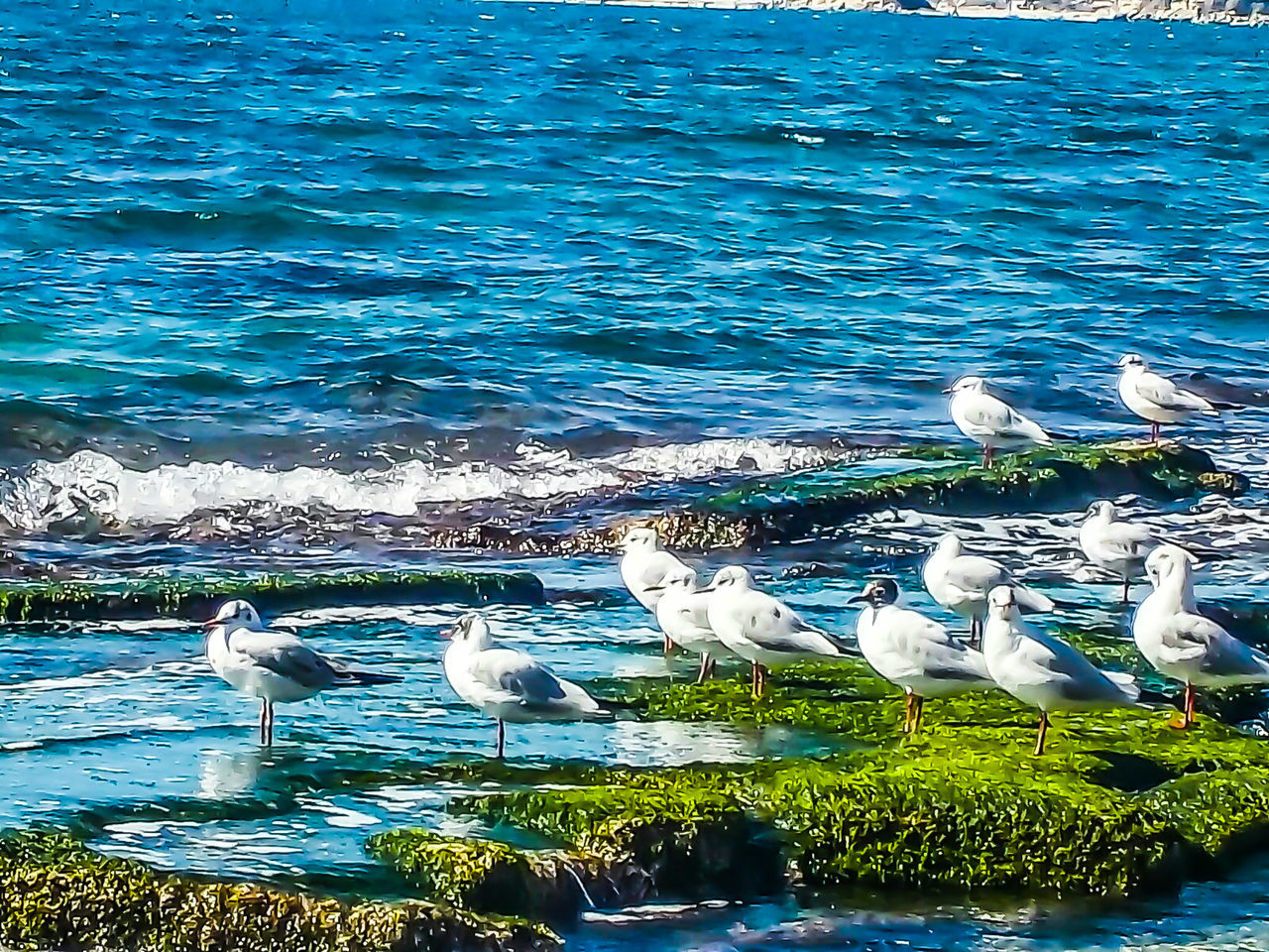 Seagull on mediteranean sea by elvio Beauty In Nature EyeEm Diversity Art Is Everywhere Artphotography Yogainspiration Eye Em Nature Lover EyeEmNewHere National Geographic EyeEmBestPics Fine Arts Photography EyeEm Best Edits Eyem Best Shots Nature_collection Birds Of EyeEm  Springtime Magazine Cover Design Vintage Style EyeEmNewHere Break The Mold The Great Outdoors - 2017 EyeEm Awards