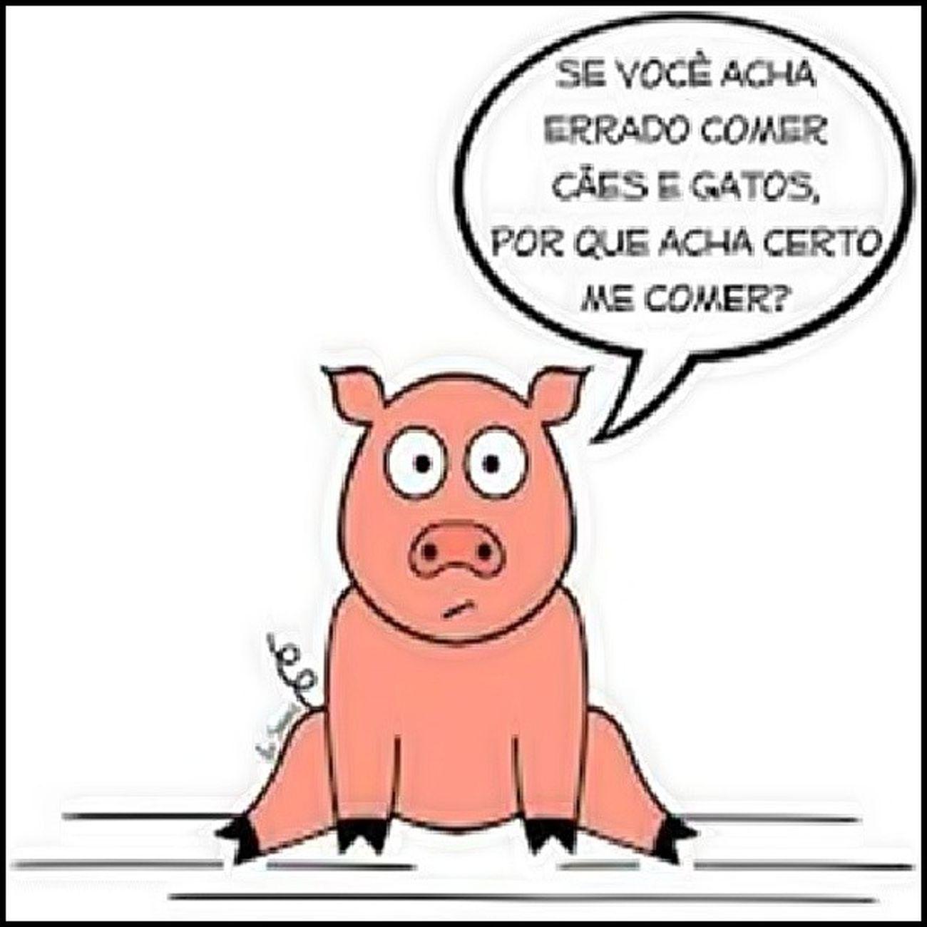 Porco Pigs