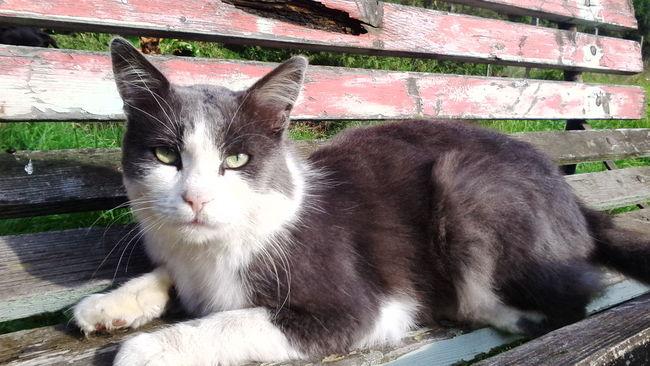 Ahoj, jmenuji se Prcek! :) Hi! Relaxing Cat