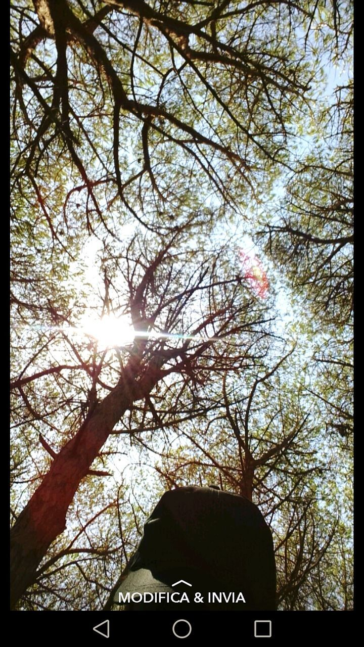 text, tree, communication, day, sunlight, low angle view, outdoors, branch, nature, no people, bare tree, sky