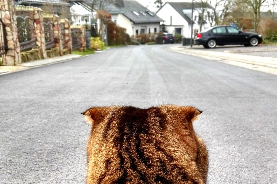 ❤🐱Mein bby Cat♡