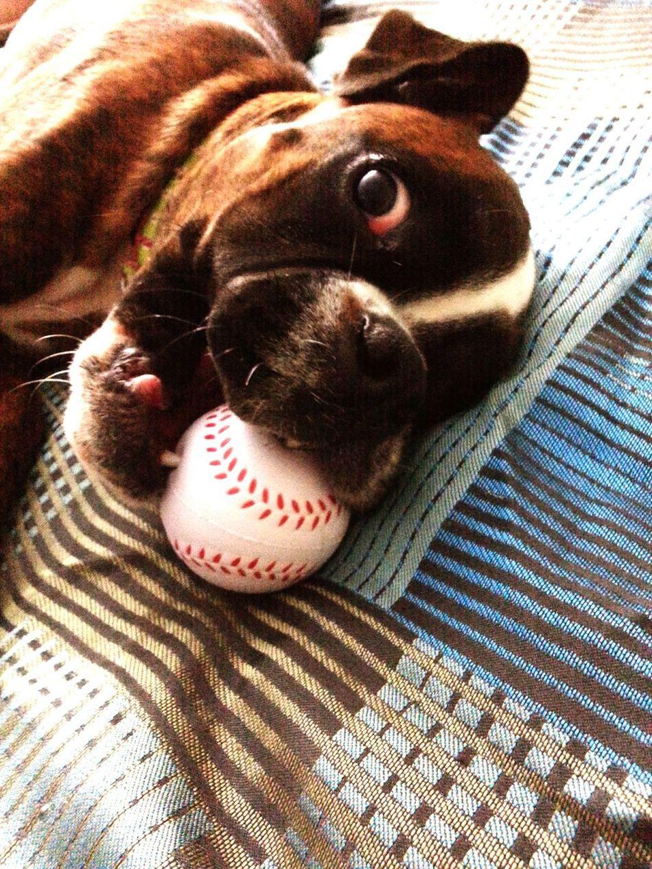 Beautiful stock photos of baseball, Animal Mouth, Animal Themes, Ball, Baseball - Ball