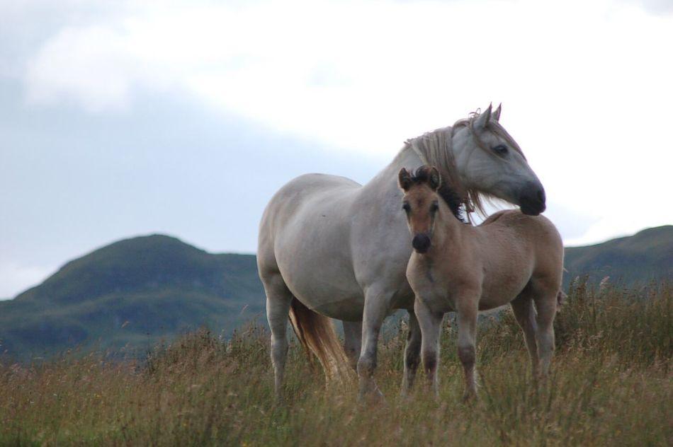 Beautiful stock photos of pony,  Animal Family,  Animal Themes,  Beauty In Nature,  Care