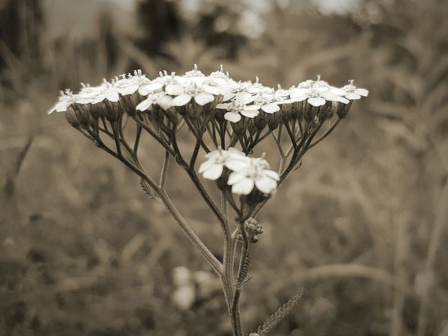 Nature Nature Art Flower Plants Perfection Black And White Black & White Land Rural Countryside