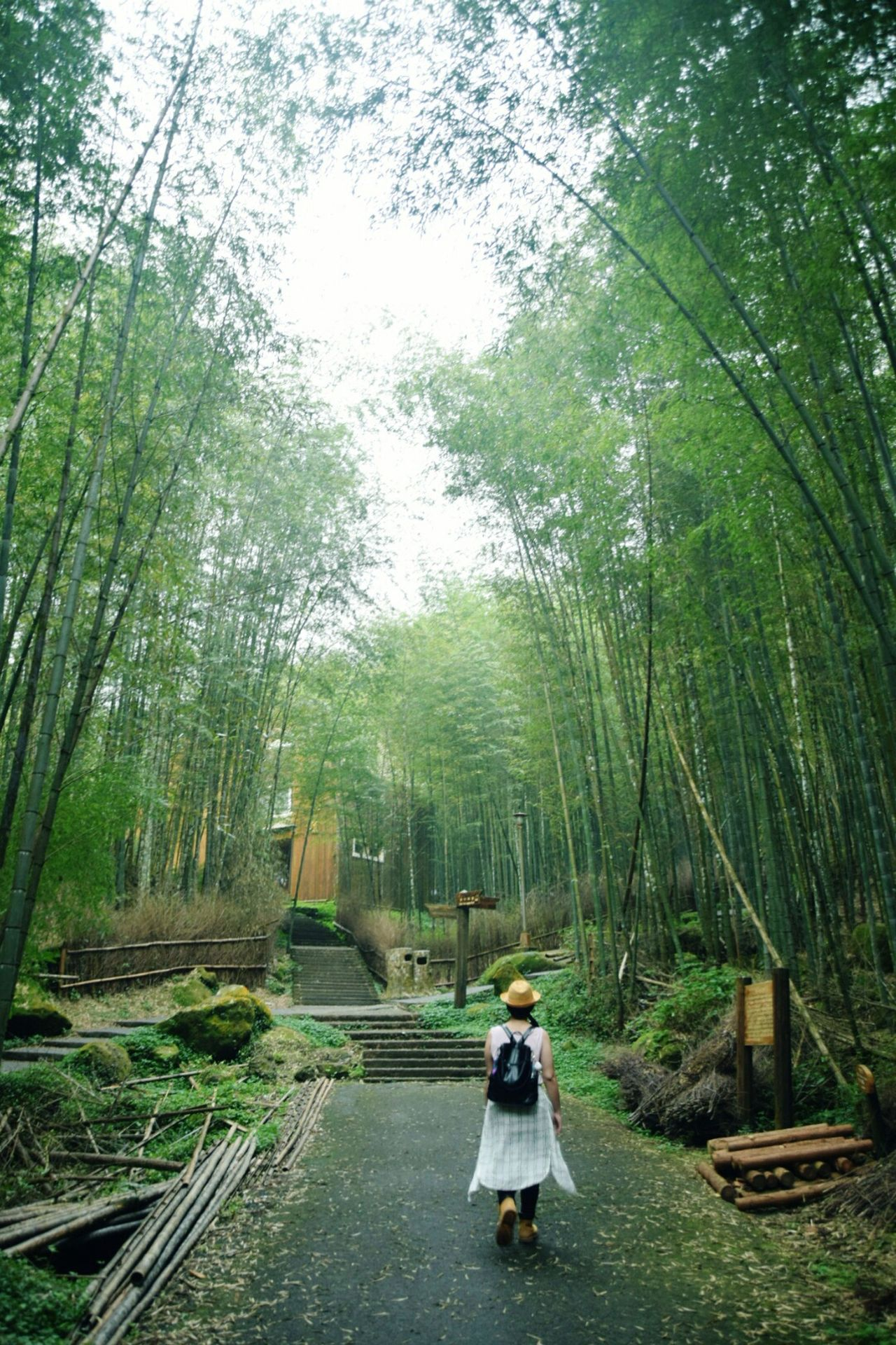Nature Outdoors Forest Bamboo - Plant Freedom Travel Travel Photography Enjoying Life Free Landscape Nature Photography Naturelover Nature_perfection Landscape_lovers Landscape_photography Naturecolors Bamboo Bamooforest Nikon Nikonphotography Nikond5300