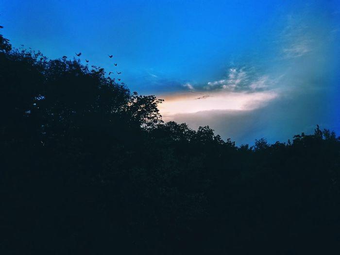 Sunset Sky And Clouds Sunlight And Clouds Tree Birds Flying Over The Trees Color Contrast Nature No People Blue Beauty In Nature Space Sky Outdoors Tree Area Home Kashmir