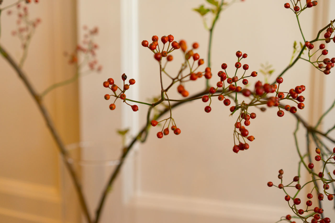 Berries Berries On A Branch Christmas Decorations Christmastime Holidays