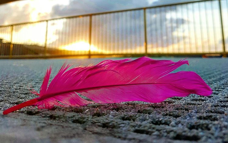 Sunset No People Outdoors Close-up Life Vibrant Color Feathered Friends Feather  Pink Feathers