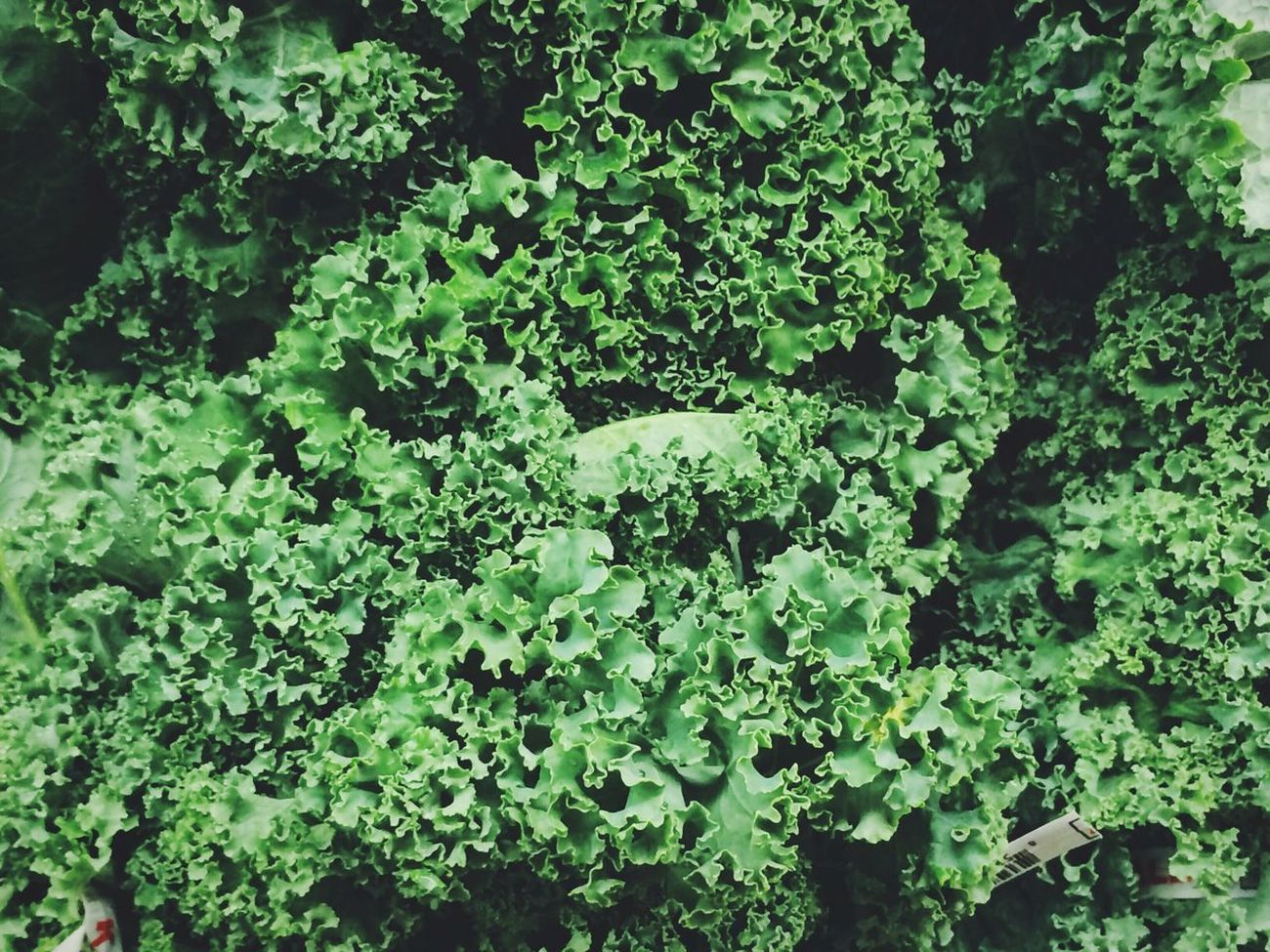 All hail kale: In celebration of Pantone's forecasted color of 2017, we've curated a collection devoted to this hearty vegetable and glorious green hue! 💚 http://eyeem.ai/2eVR6zV
