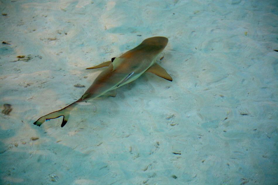 Beautiful stock photos of shark, Awe, Calm, Chance, Clear Sky