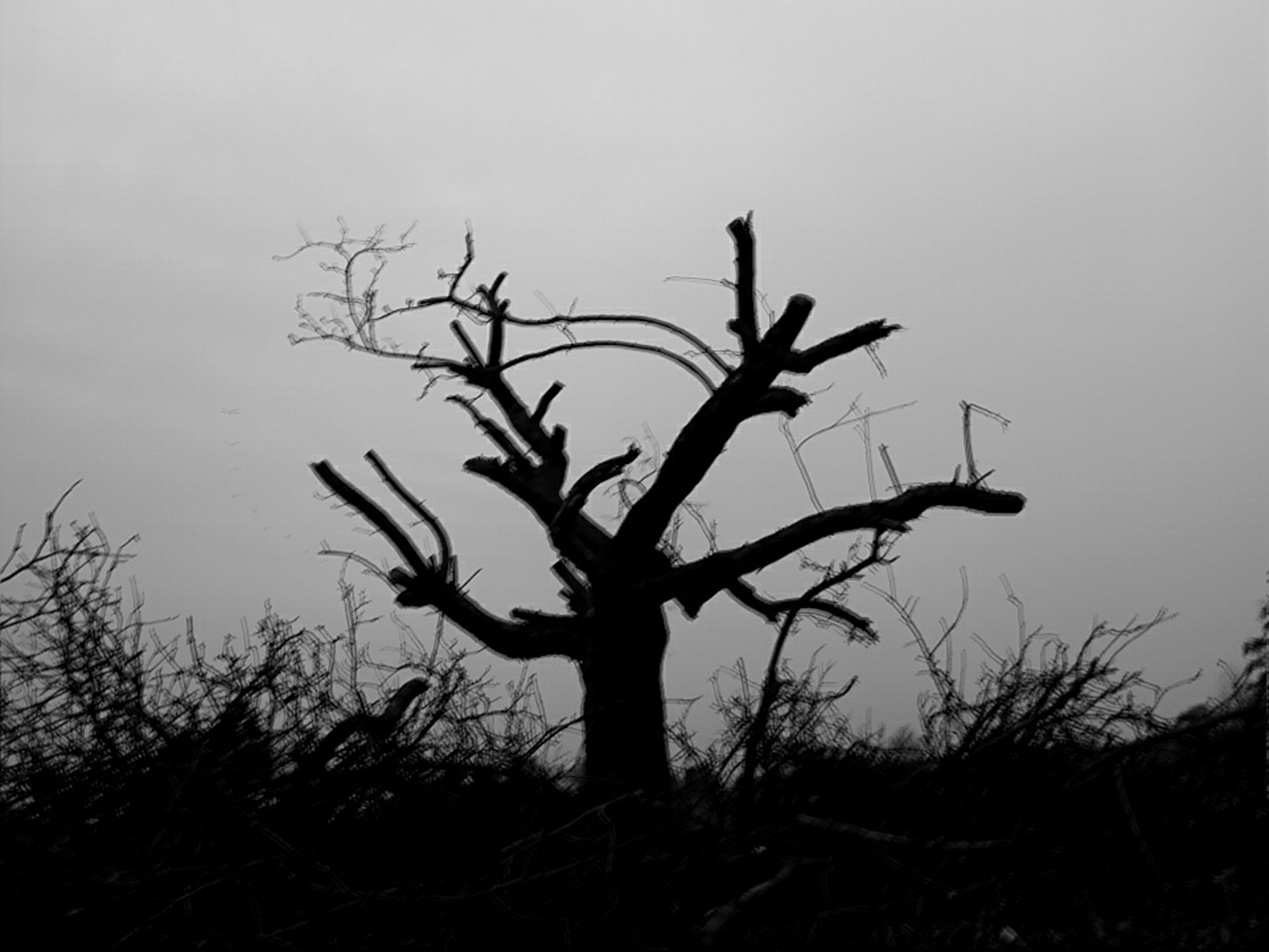 bare tree, tranquility, silhouette, branch, tranquil scene, nature, clear sky, tree, beauty in nature, scenics, sky, growth, dead plant, copy space, non-urban scene, outdoors, landscape, dusk, no people, field