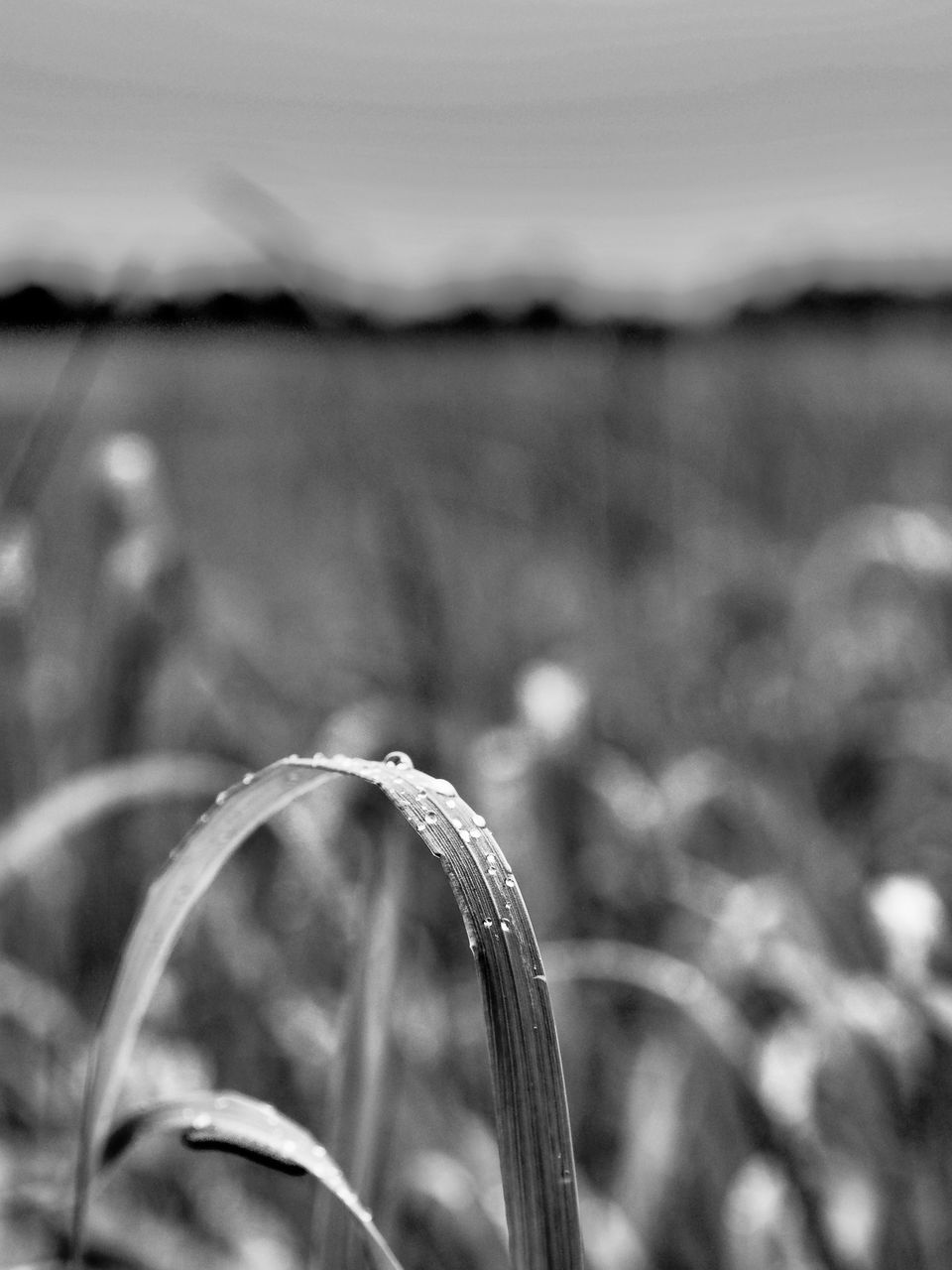 focus on foreground, nature, growth, no people, plant, outdoors, tranquility, day, close-up, beauty in nature, grass, water, freshness, sky