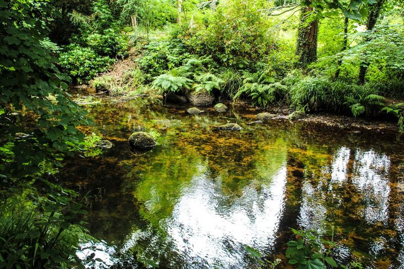 River Riverside WoodLand Green Color Green Devon Tree Trees England United Kingdom