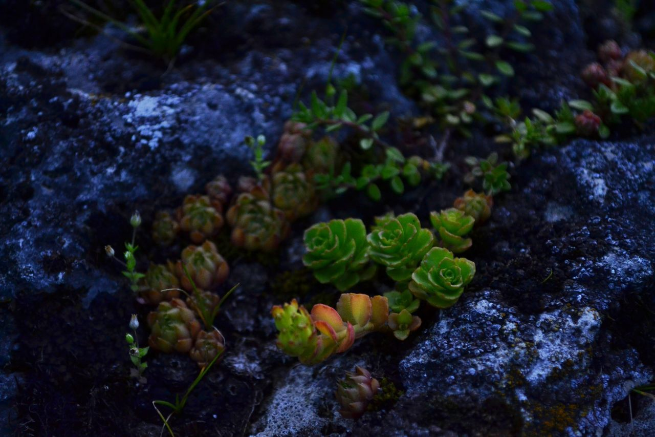 Moss Tusheti The Purist (no Edit, No Filter) Tadaa Community No Edits No Filters Nature_perfection EyeEm Best Shots Low Light Photography The Purist ( No Edit, No Filter ) Nature_collection No Edit/no Filter Canon Photography EyeEm Best Shots - Nature EyeEm Best Shots - Flowers Colour Of Life