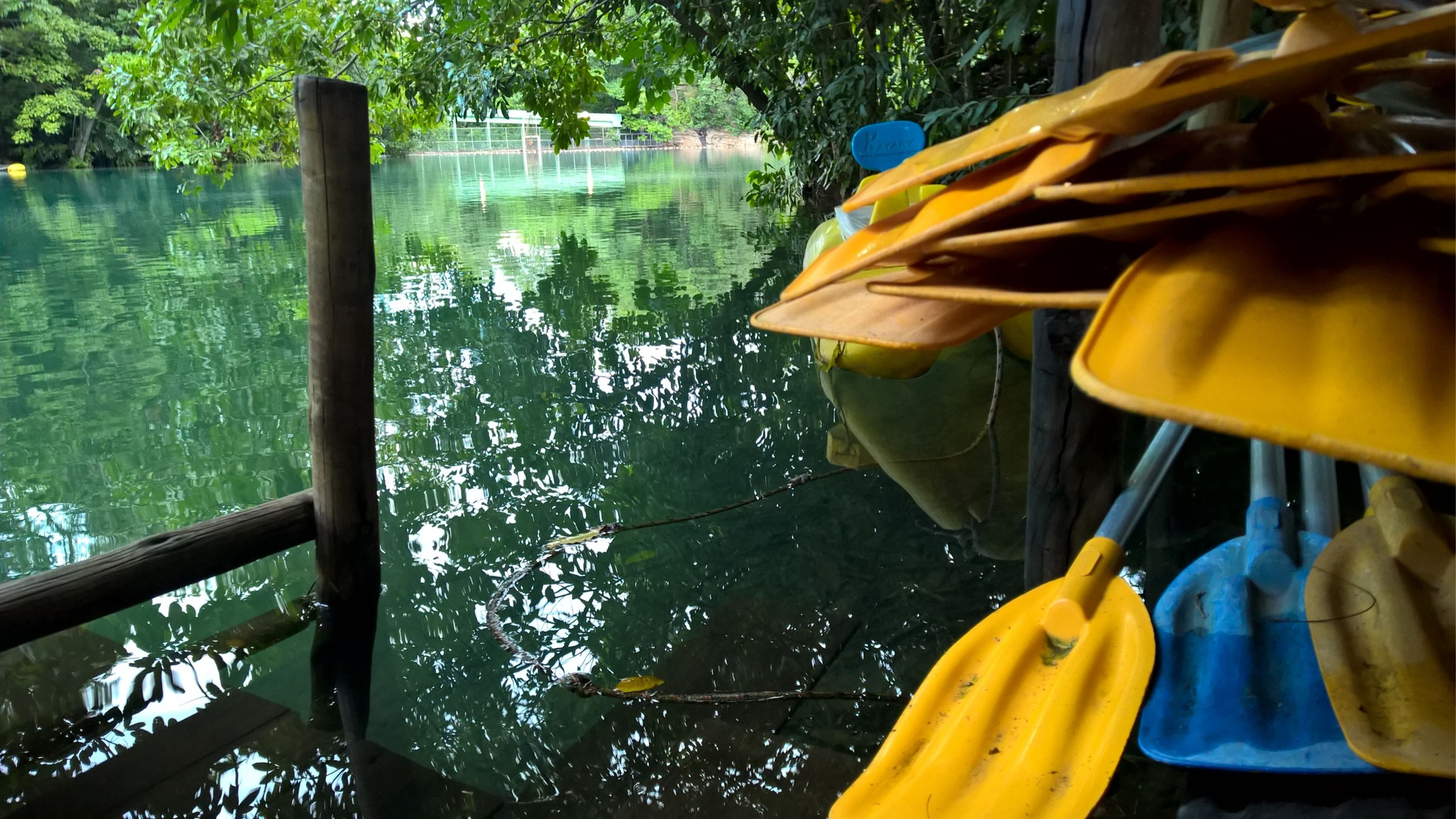 yellow, tree, water, close-up, growth, nature, day, outdoors, tranquility, beauty in nature, sunlight, park - man made space, reflection, no people, part of, plant, green color, lake, hanging, nautical vessel