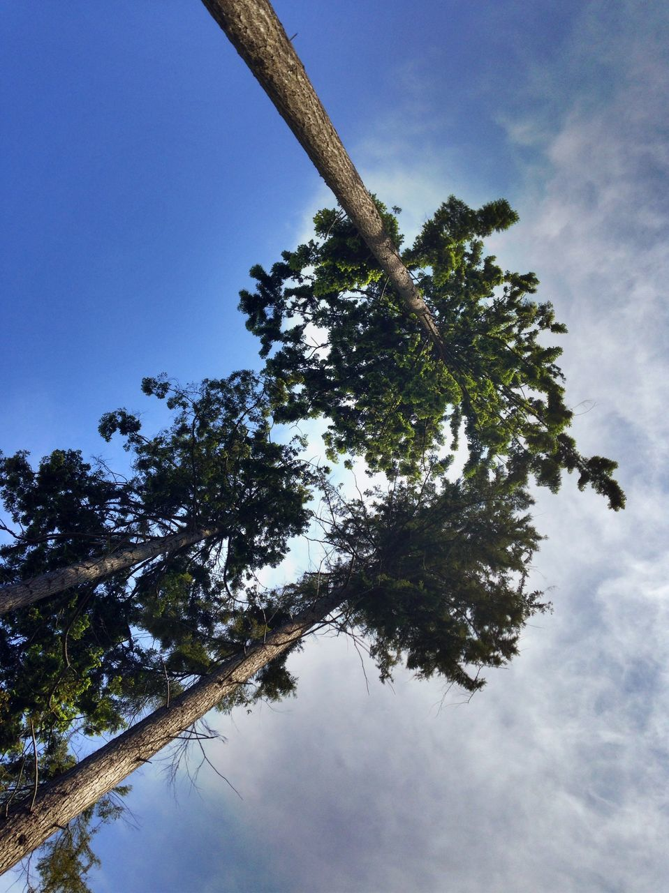 tree, growth, nature, low angle view, no people, branch, beauty in nature, day, sky, tranquility, outdoors