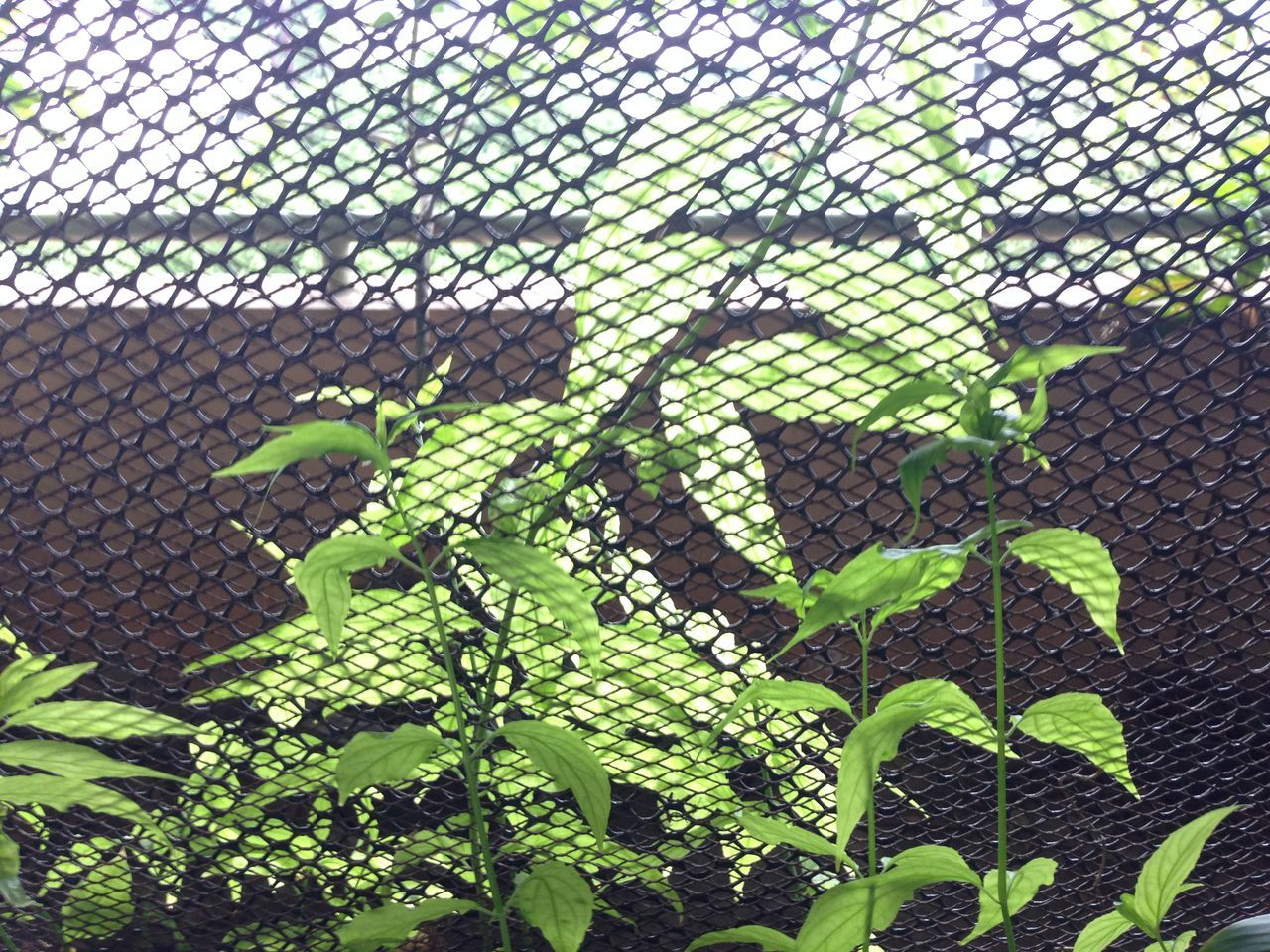 Plants Growing Behind Fence
