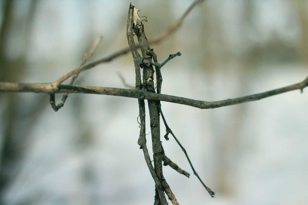 Branch Nature Close-up No People Winter Outdoors Beauty In Nature Day Wilted Plant