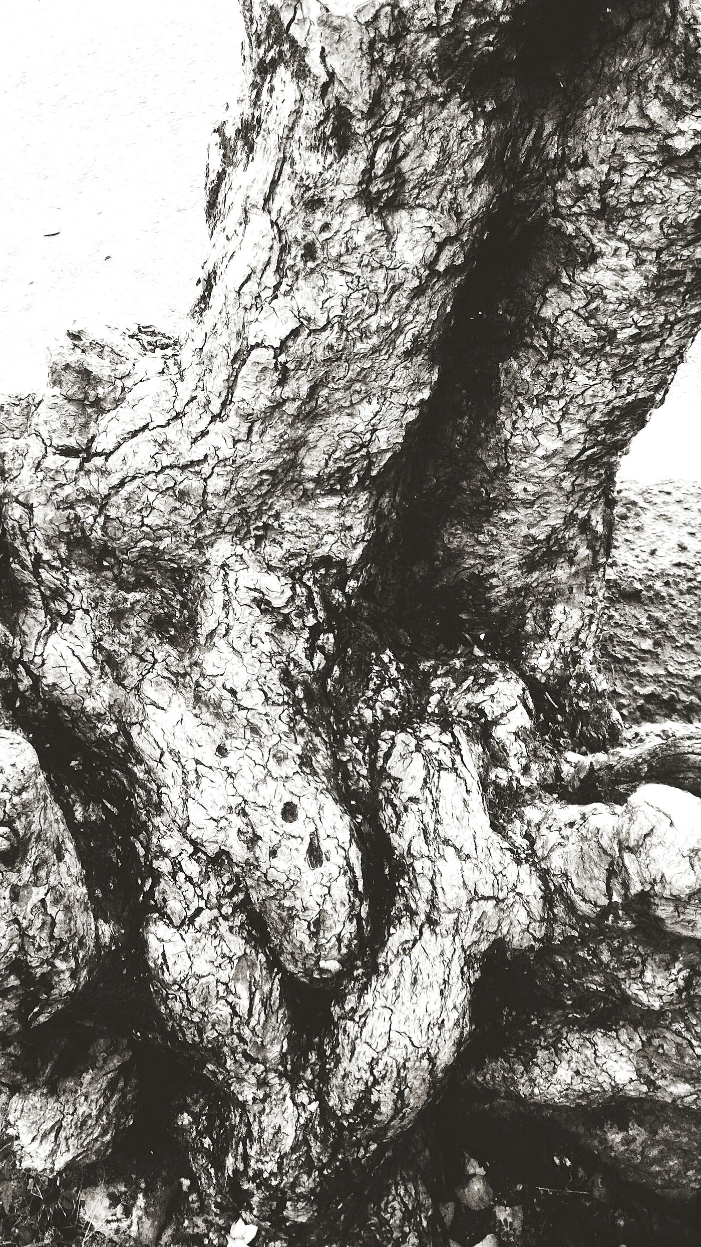 You can learn about strength and persistence through things around you. Well, at least, this is what I believe. My example will be as simple as this picture. A tree. An old one. Its roots. Tree Trunk Bark Nature Beauty In Nature Close-up Monochrome Outdoors Single Tree Tree Plant Naturephotography Naturelovers Whatiseewheniwalk Black And White Photography Black&white Bw-collection Bwoftheday