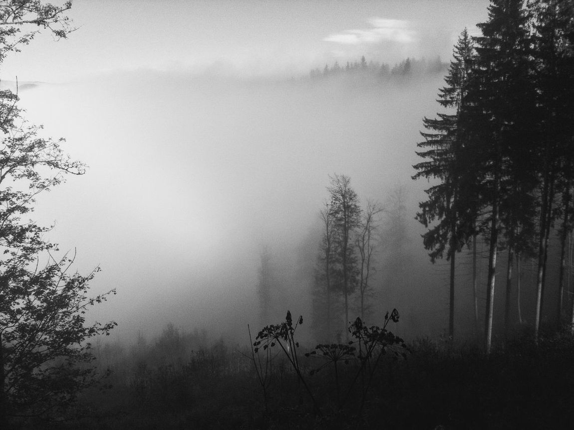 Atmosphere Beauty In Nature Blackandwhite Blackandwhite Photography Branch Calm Dawn Day Environment Fog Foggy Growth Idyllic Majestic Mist Nature Non-urban Scene Plant Scenics Sky Tranquil Scene Tranquility Tree Weather WoodLand