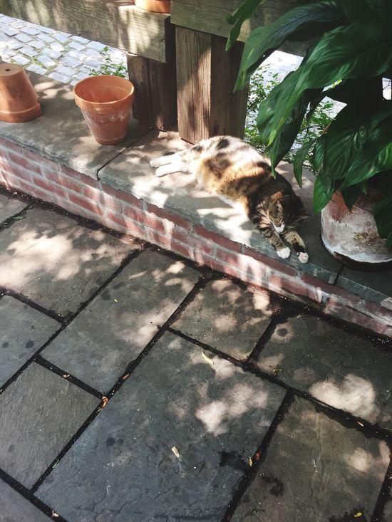 Street cat lounging...