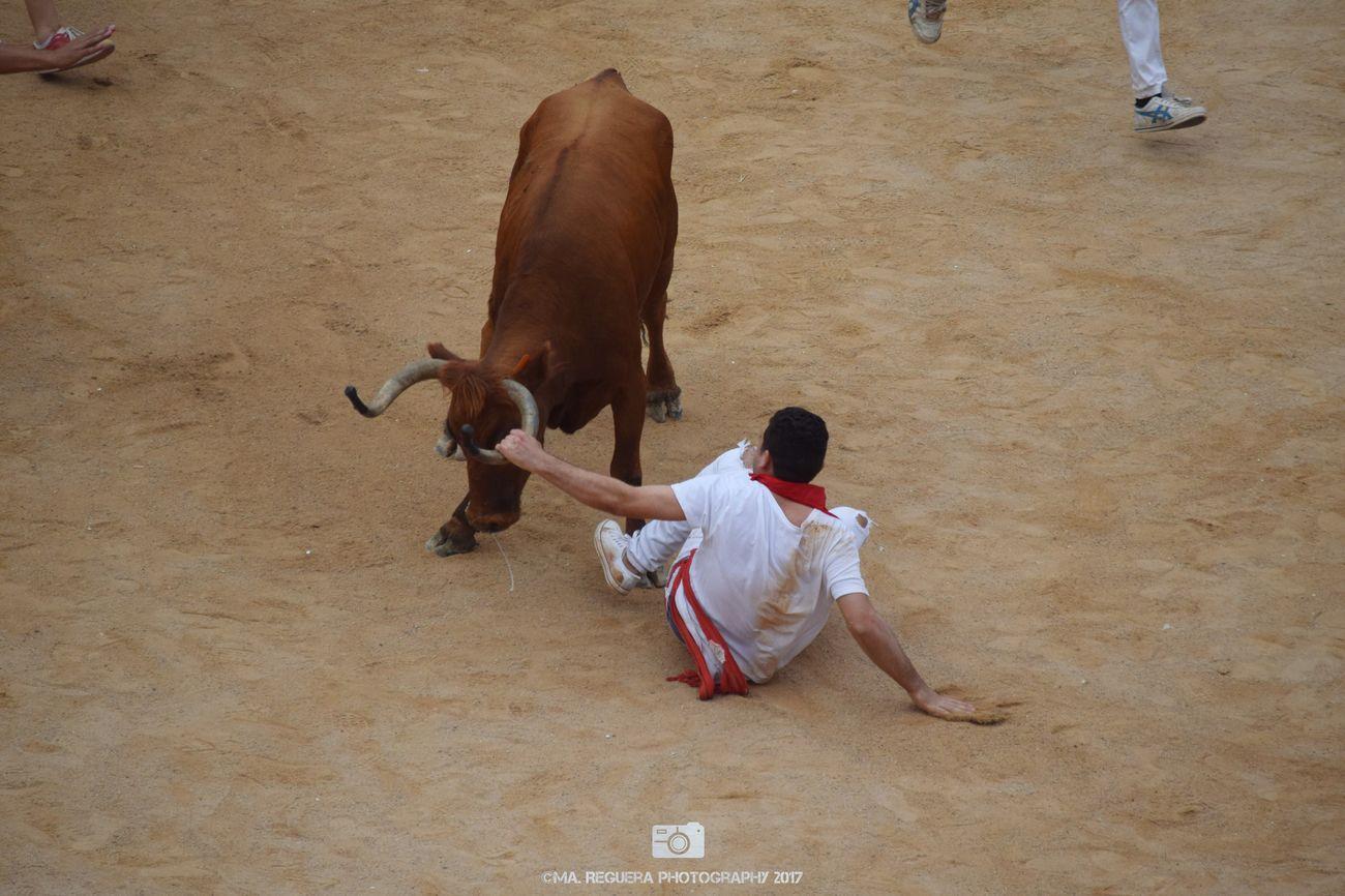 EyeEm Selects San Fermin Sf2017 Bullring Animal Bull People Man Friends Pamplona Navarra