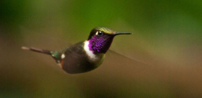 Animal Themes Animals In The Wild Beauty In Nature Hummingbird Nature No People One Animal Outdoors