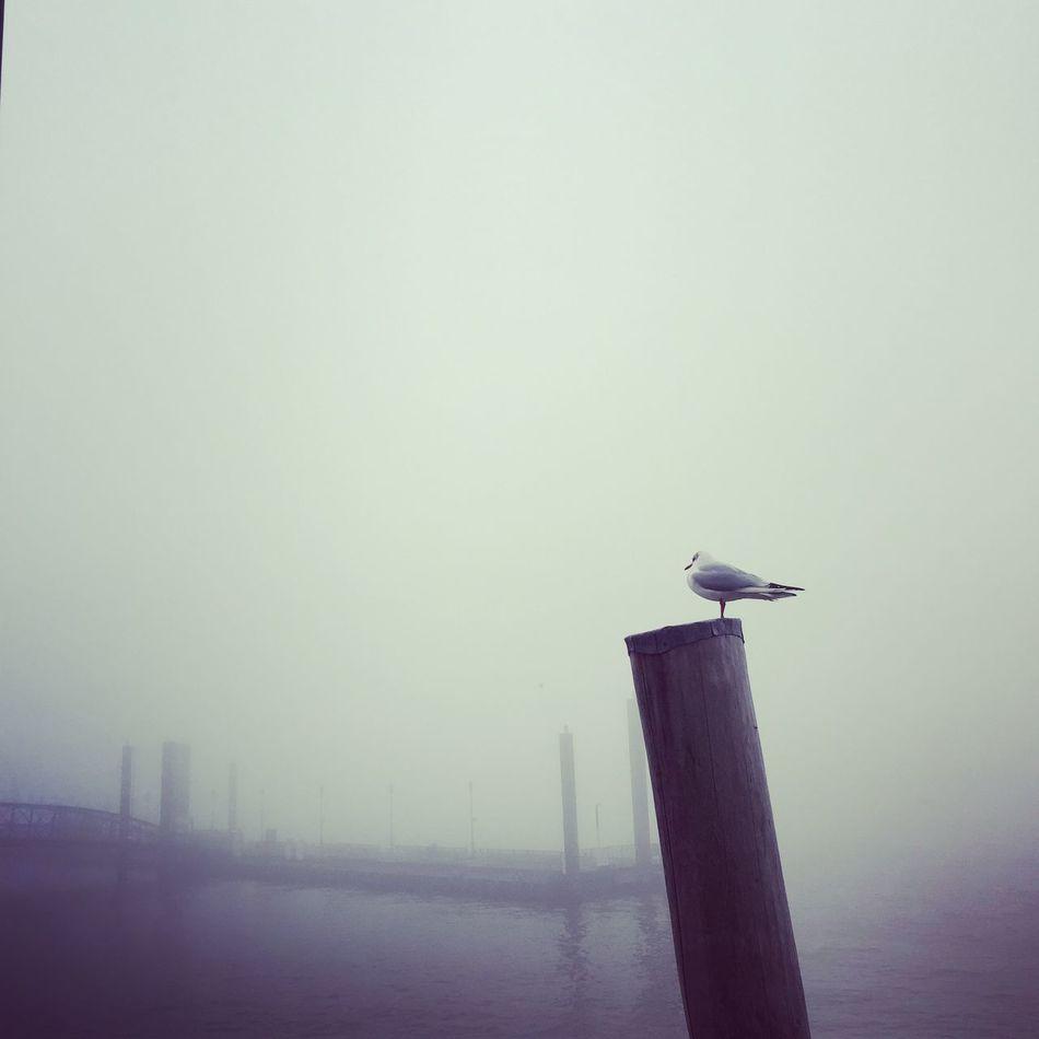 Moment der Ruhe Bird Desire Einsamkeit Fog Gull Hafen Hamburg Haze Keine Menschen Landungsbrücken  Lonely Meer Mist Möwe Nature No People Ruhe Seagull Sehnsucht Silence Sky Tier Wasser Water Waterfront EyeEmNewHere