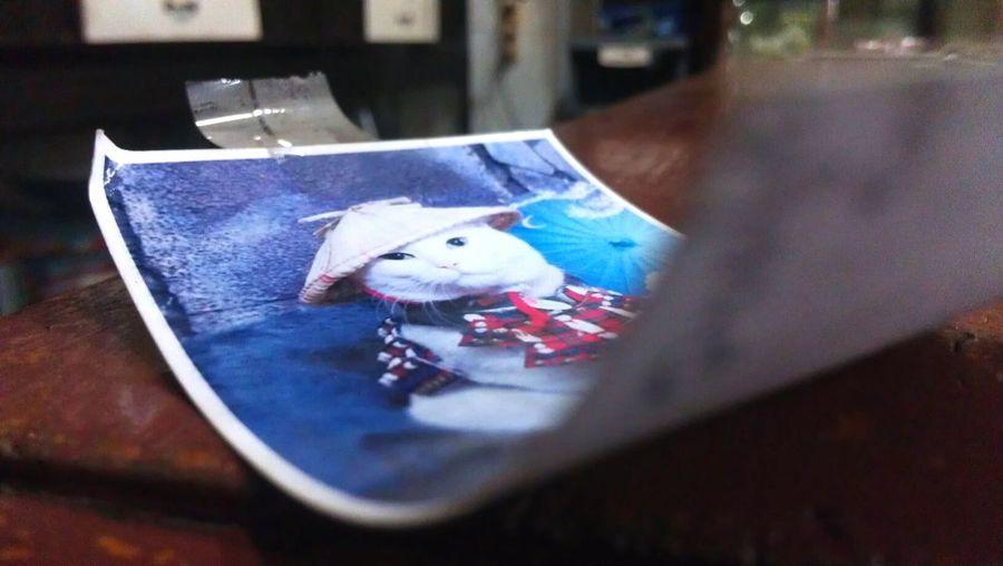 Close-up Whitecat With Hatfarmer Samurai Cat Photocat
