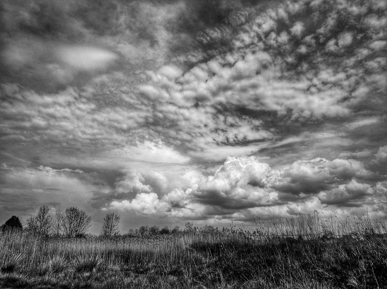 Scenic View Of Grass Landscape Against Clouds