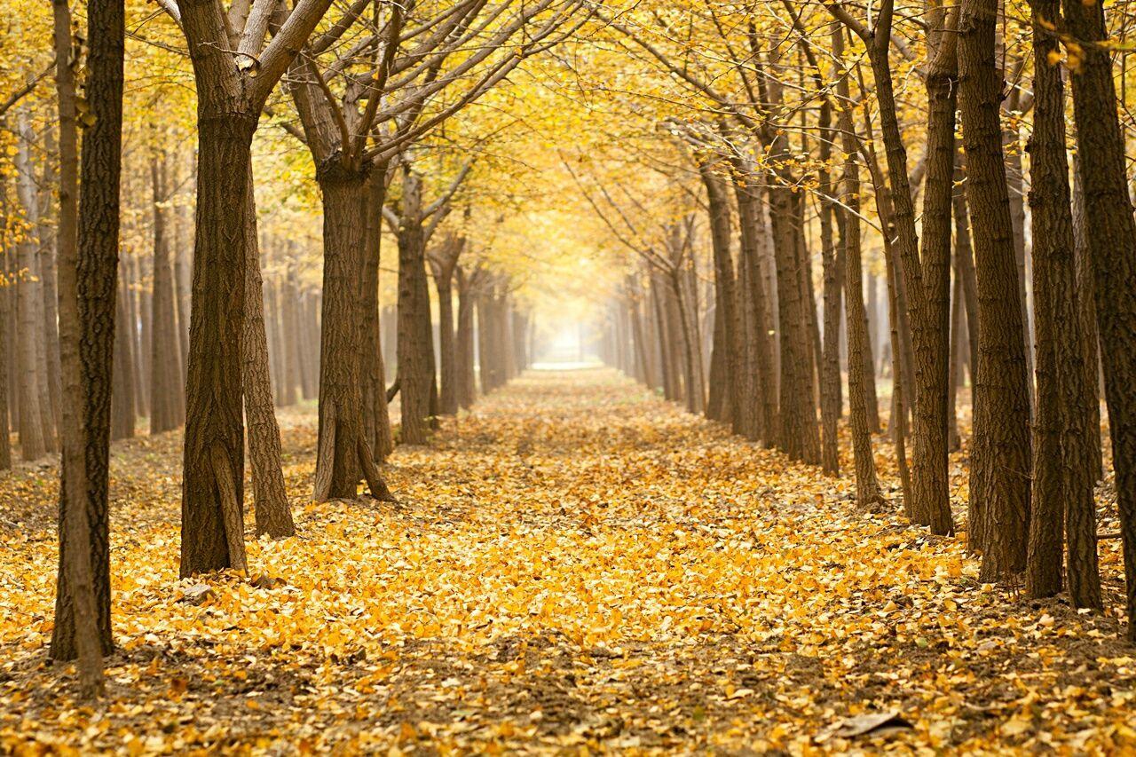 Beautiful stock photos of herbst, Autumn, Beauty In Nature, Change, Day