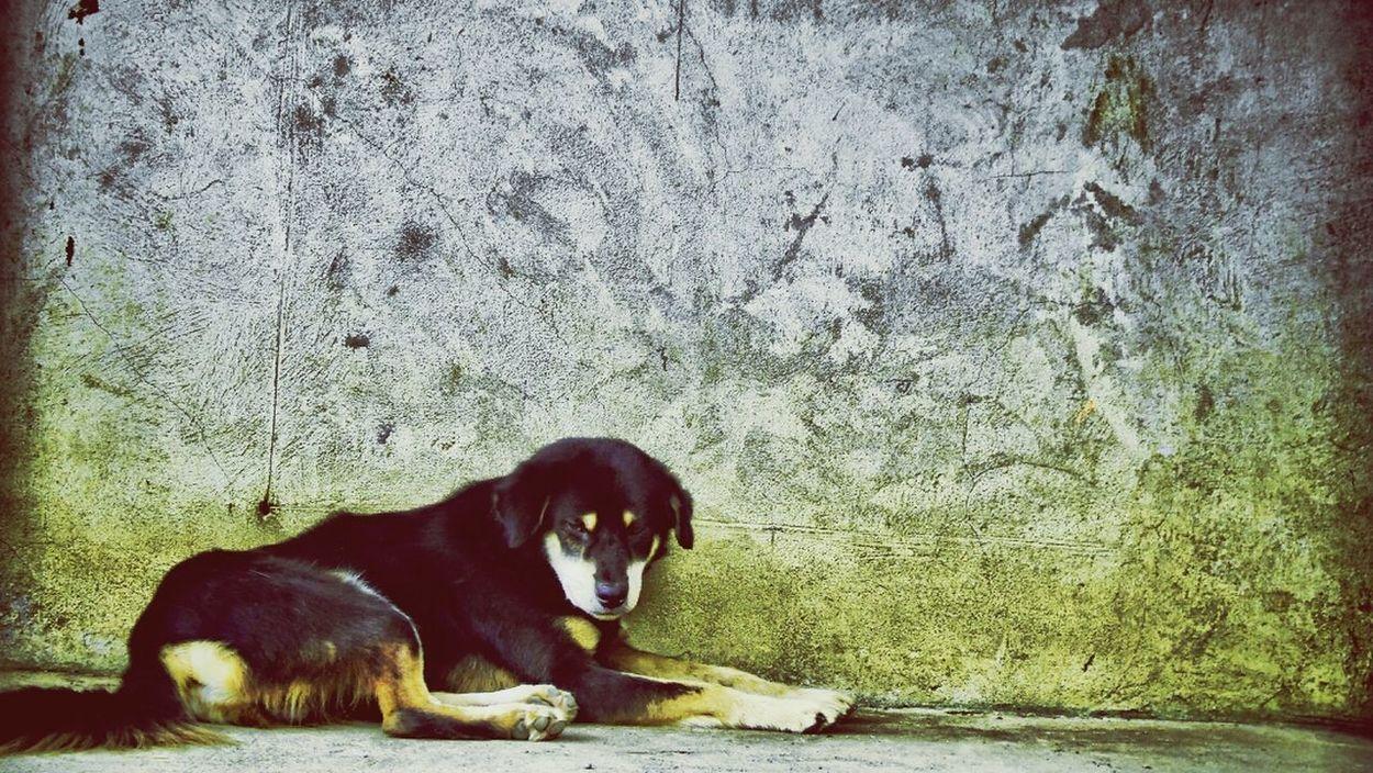 miss u b1,b2 and beang... Dog Eyeem Philippines Shoot, Share, Learn - EyeEm Cagayan De Oro Meetup Dog Lover