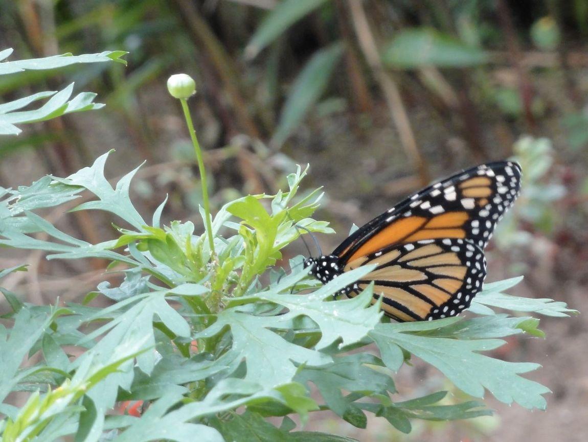 Butterfly, Costa Rica, Outdoors Juntas