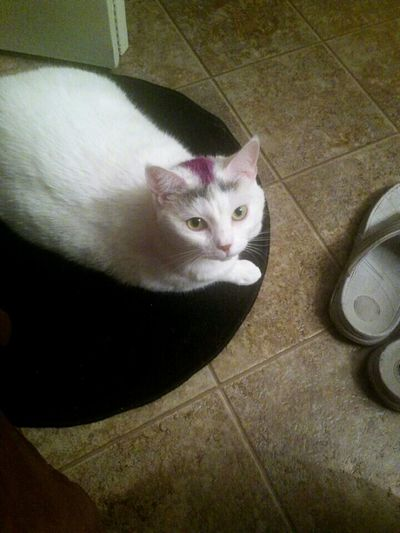 ...and she's right there waiting for me when I step out. Portrait One Animal Pets Cats Cats Of EyeEm Cute Cats Boo Boo Kitty Looking At Camera Sweet Patiently Waiting Loving Beautiful I Love My Cat ❤ Bath Mat Sandals Things In My House From My Point Of View Union Park Orlando